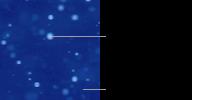 コレステリック液晶粒